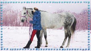 С чего начать обучение лошади | КОННЫЕ СОВЕТЫ
