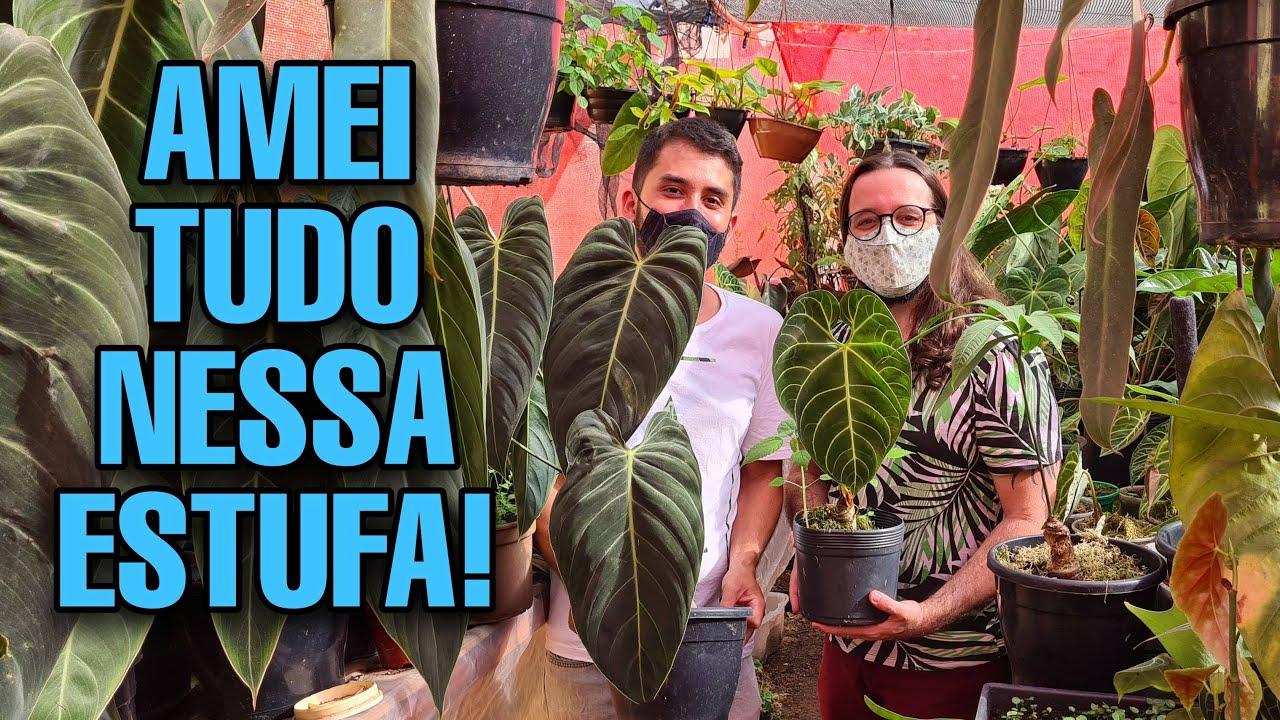 CHOCADO COM AS PLANTAS DESSE COLECIONADOR DE ARACEAE - AROID