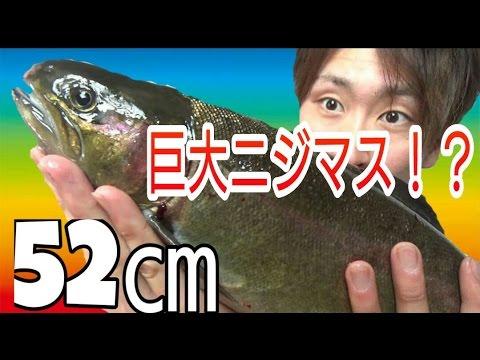 『秘密の場所』で獲った『巨大魚』を豪快に姿造り!