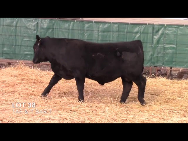 Taliaferro Angus \u0026 T Bar T Angus Ranch - 38