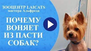 Как чистить зубы у собак / почему идет вонь из пасти
