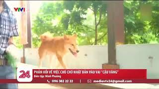 Cậu Vàng - Vì sao lại là giống chó của Nhật? | VTV24