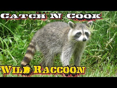 Catch N Cook Raccoon Slow Cooked Over Open Fire!