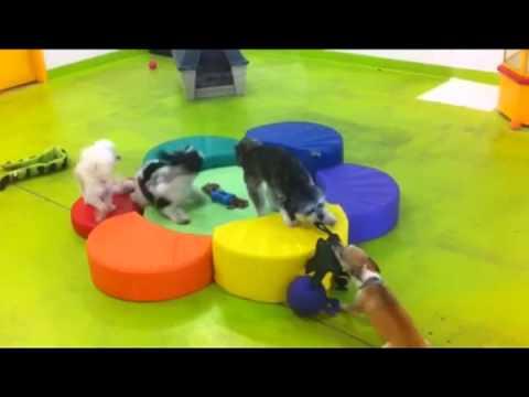 awesome doggy daycare my pet garden pet store pasadena ca - My Pet Garden