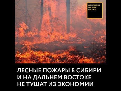 Лесные пожары в Сибири и на Дальнем Востоке не тушат из экономии