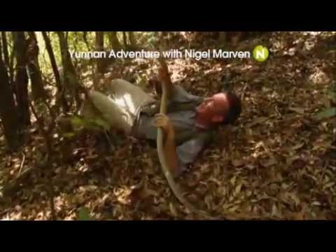 Viasat Nature Scandina - Yunnan Adventure With Nigel Marven promo