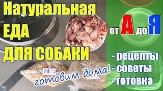 Натуральная еда для собаки, натуралка:  рецепты, советы, готовка
