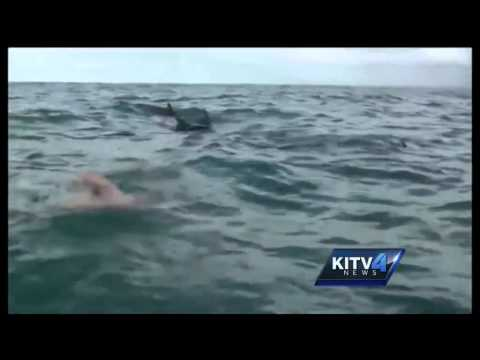 How dolphins protected a swimmer from a shark