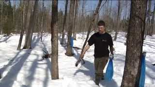 Mighty Oaks Mens Academy, Maple Syrup Production, Superior Wisconsin, Duluth Minnesota