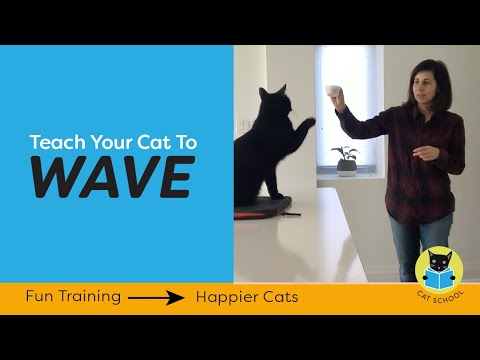 Cat Tricks: Teach your cat to wave.