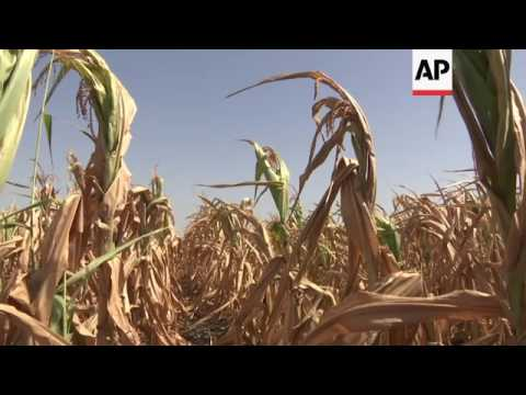 Fears for crops, wildlife, in Serbia drought