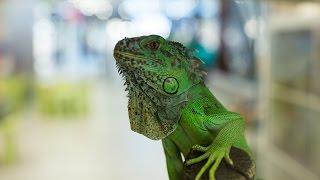 Egzotyczne zwierzęta w Gemini Park Bielsko-Biała