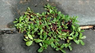 अगर आपके घर में थोड़ी सी भी जगह है तो इस पौधे को जरुर लगाओ, यह एक नहीं लाखो बिमारियों की दवा है