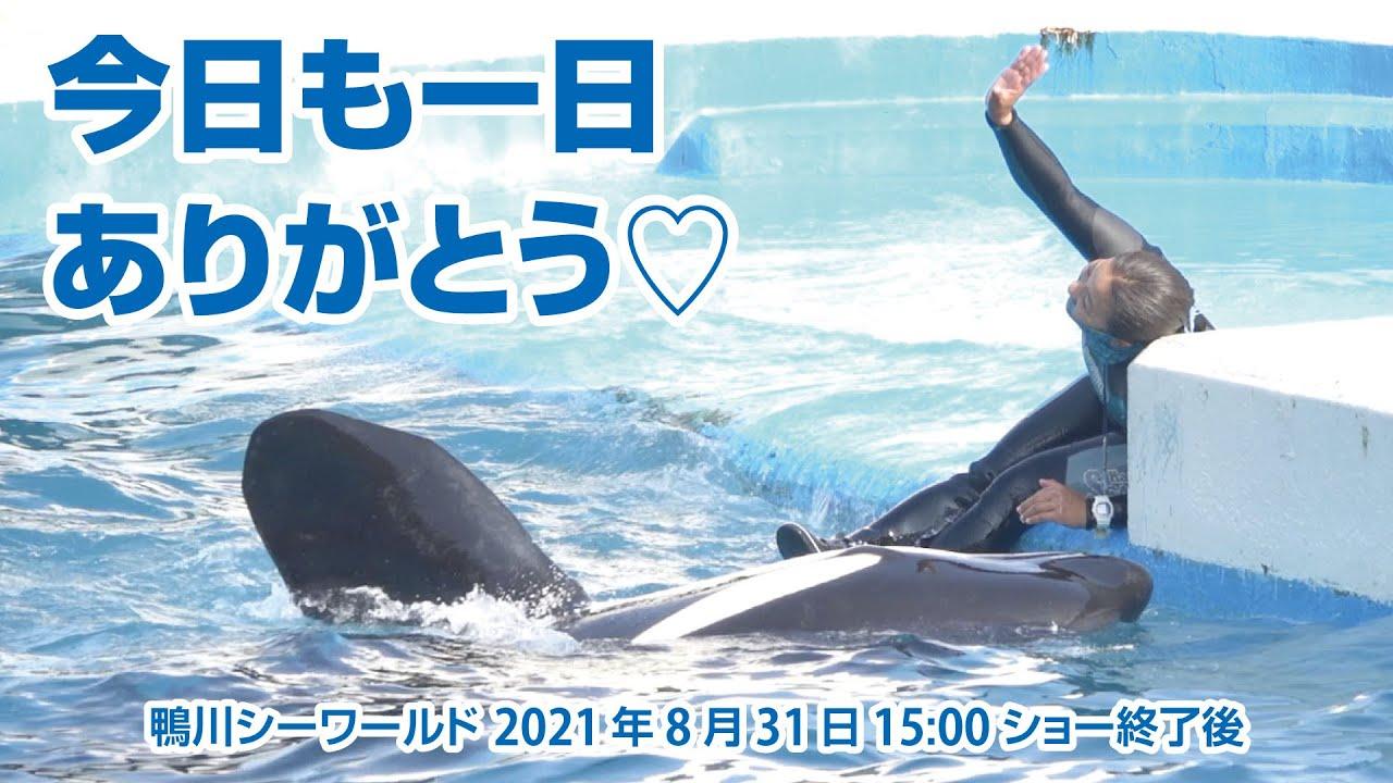 今日も一日ありがとう!【2021年8月31日15:00ショー終了後】Orca performance, Kamogawa Sea World, Japan