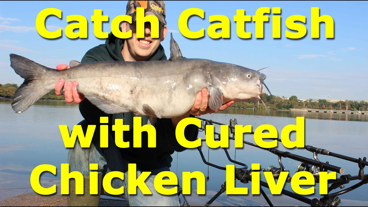 Awesome catfish bait cured chicken liver on an egg loop for Cat fish bait