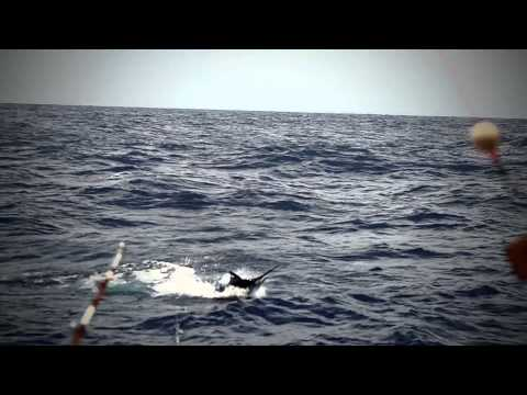 A1 Fishing Seychelles - Marlin, sailfish, dorado, kingfish and yellowfin tuna action