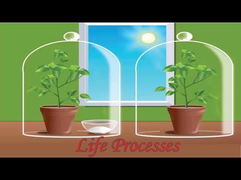 cbse-class-10-science---6-||-life-processes-||-full-chapter-||-by-shiksha-house