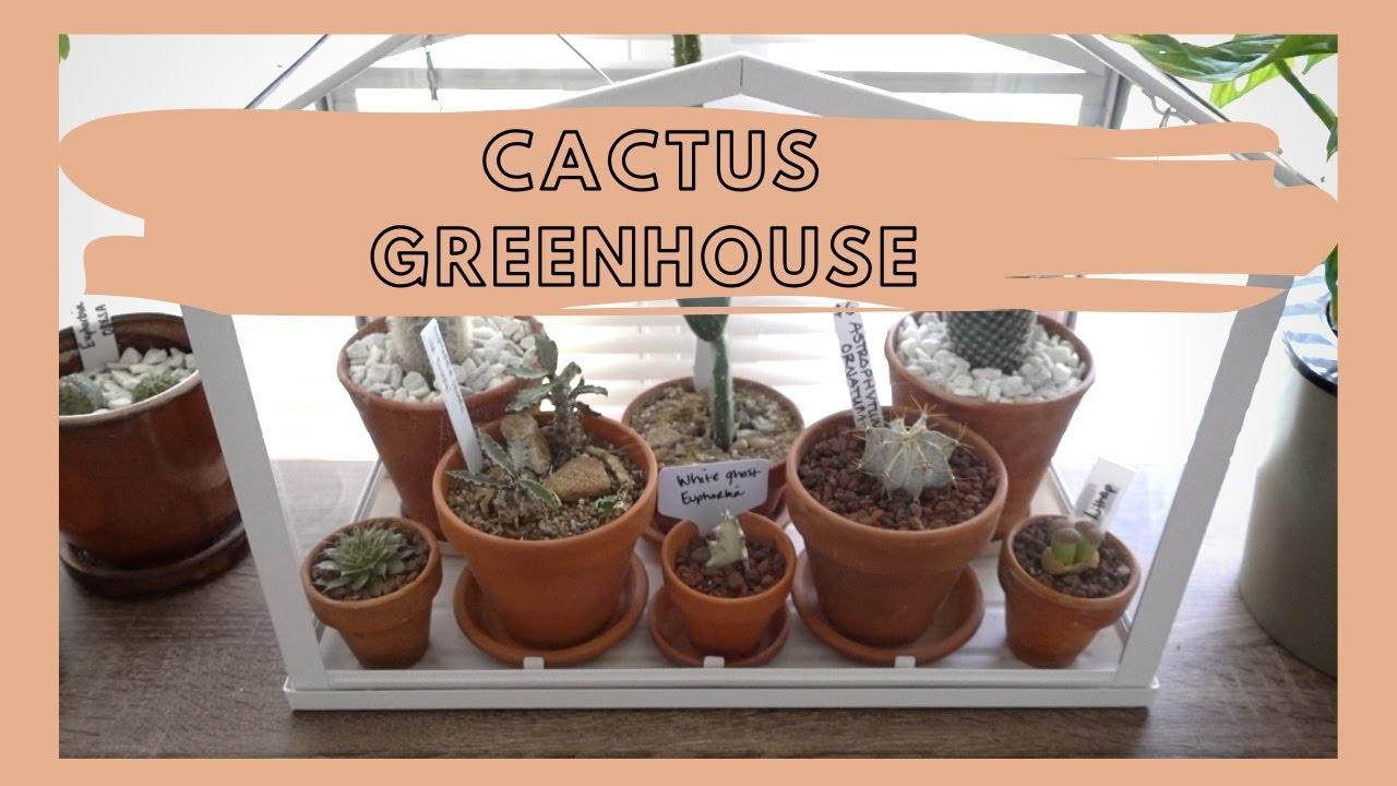 Mini Cactus Greenhouse