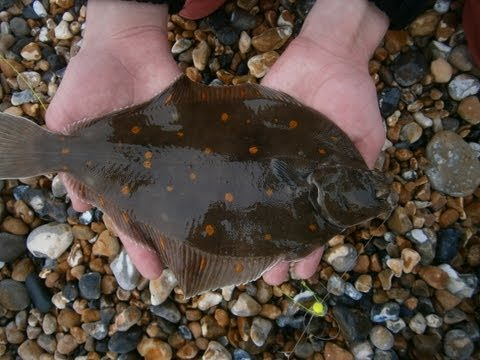 How To Catch Flatfish - East Sussex Casters