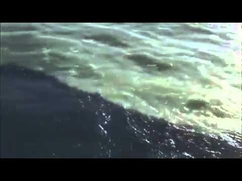 Hind Mahasagar & Arabian Sea ClassicVideos-yogeshkatre1