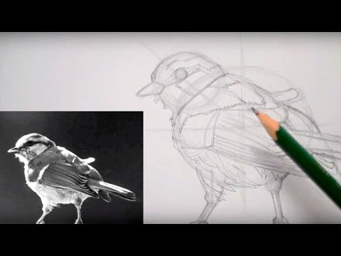 How to Draw a Sparrow using Guides and Shapes (Part 1) ✔