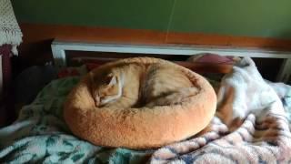 Рыжий котята))
