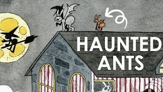 HAUNTED HOUSE - An  Ant Illustration