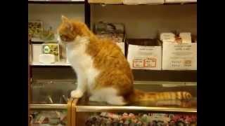 Кот на витрине галантерейного магазина
