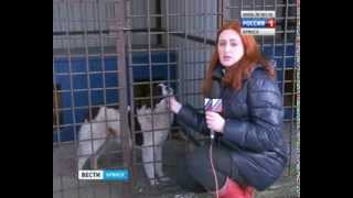 В Брянске открылся приют для бездомных животных