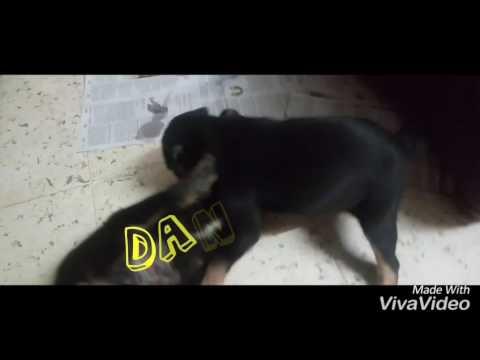 Download Dangaal