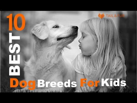 10 Best Dog Breeds for Kids (FRIENDLY & PROTECTIVE)