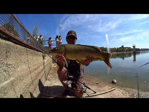 Paraíso de pesca á Carpa em Alpiarça - 4K