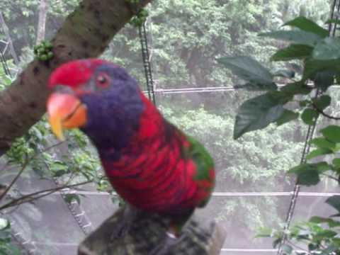 Johnny the Friendly Parrot