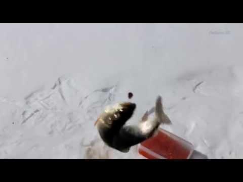 рыбалка на удочку видео
