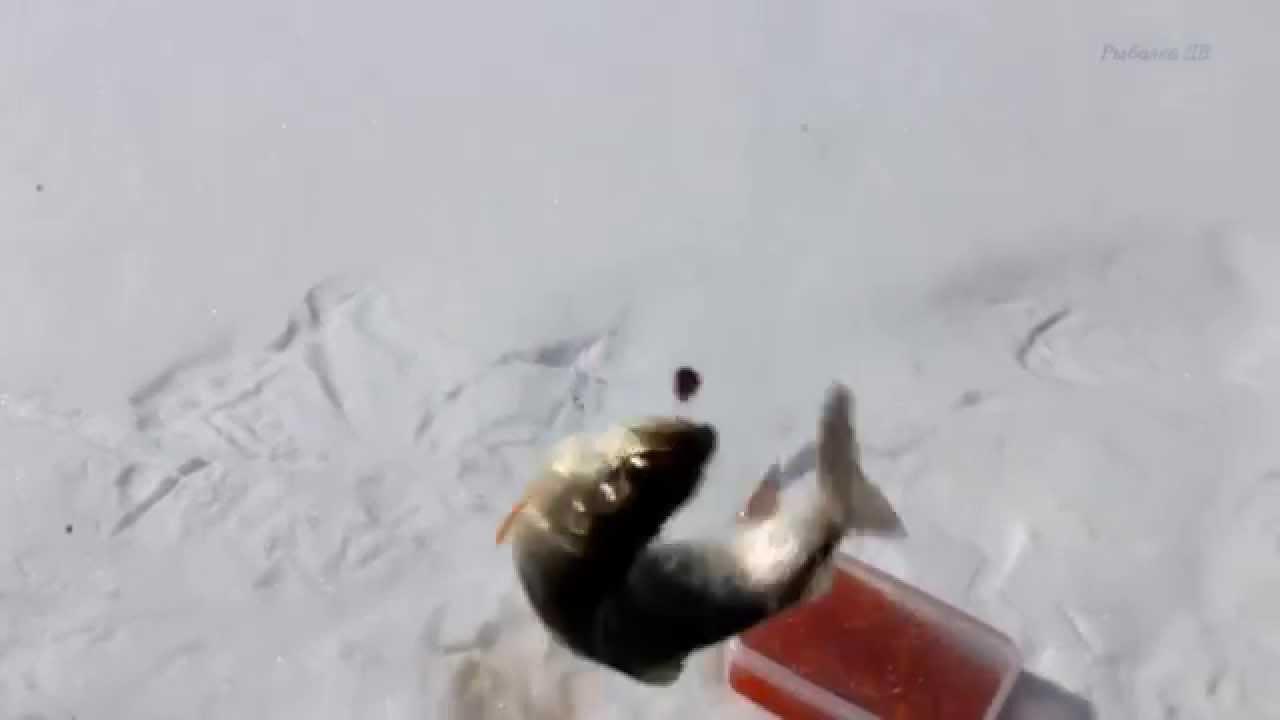 Зимняя рыбалка на ленка смотреть онлайн — photo 9