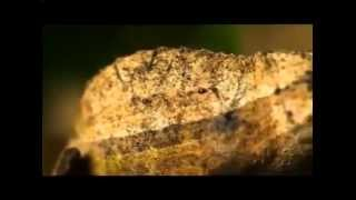 Винная змея vs карликовый хамелеон