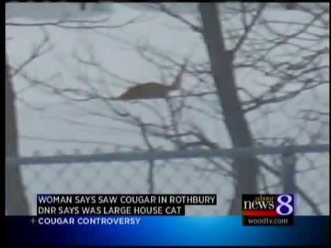 Are cougars living in West Michigan?