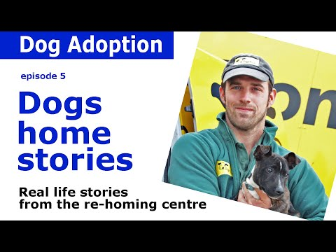 Dogs Trust Documentary - Episode 5