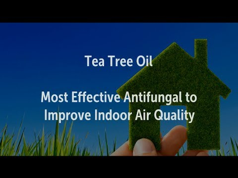 Tea Tree Oil Most Effective Antifungal to Improve Indoor Air Quality | DIY Air Purifier, Freshener