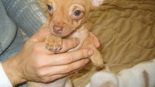 Я хочу собаку! Чего ждать от собаки? Зачем заводить собаку?(Я хочу собаку - естественное желание у человека, который любит животных и увидел маленького щенка, но мало..., 2015-05-23T05:17:35.000Z)