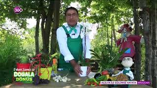 Erkan Şamcı Orkide Bakımı - Orkide bakımı nasıl olmalı?