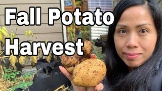 Fall Potato Harvest