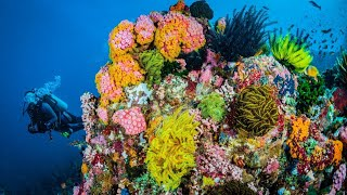 Restoring Reef Biodiversity with IntelliReefs