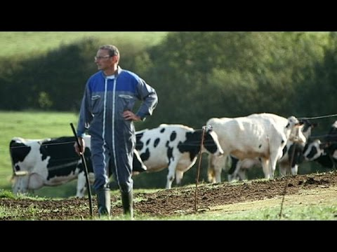 Farmers' suicides: the rising human cost of the EU's agriculture crisis - reporter