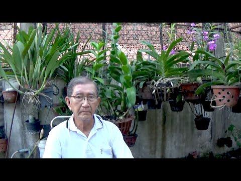 Làm Mập Thân, Mập Rễ, Cây Lớn Nhanh Cùng Thầy Tám Ngọc Mùa Corona - Nông Nghiệp Đẹp   Học Trồng Lan   Foci