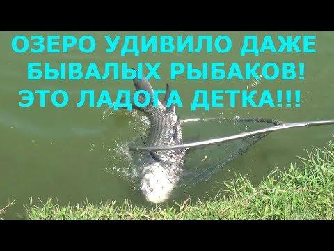 "РЫБАЛКА 2018 клевое место ""ЛАДОГА"""