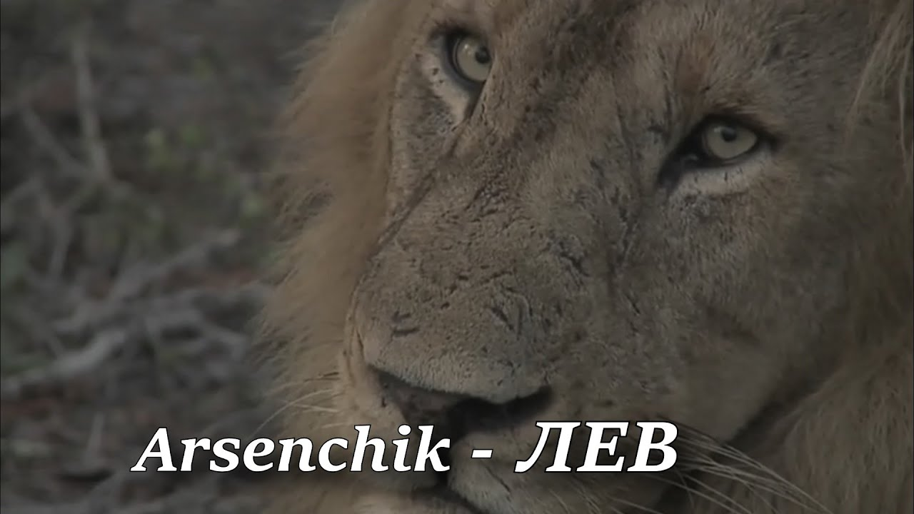 Arsenchik - ЛЕВ // ПРЕМЬЕРА ПЕСНИ 2020 // ARSENCHIK - LION // NEW PREMIERE SONG 2020 //