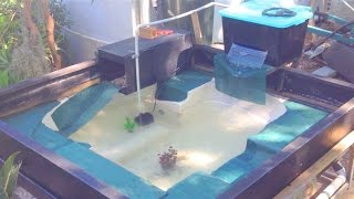 New Turtle Pond Made From A Spa!
