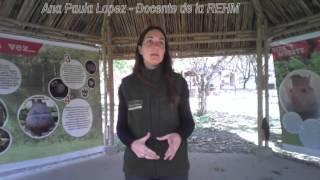 Fauna Autóctona de Tucumán
