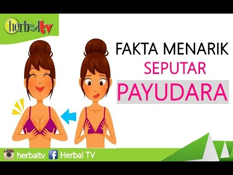 Fakta Menarik Seputar Payudara - Herbal TV